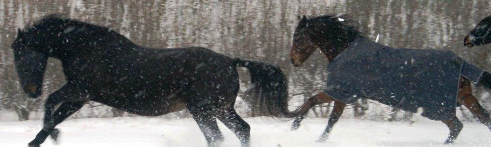 forside-heste-sne