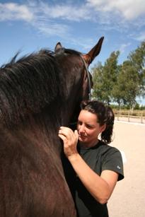 link-hest