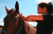 link-til-kiro-hest